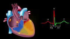 ECG and cardiac conduction system loop Stock Footage
