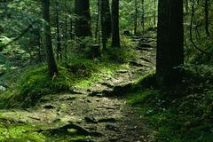 green landscape with trees and path in forest - stock photo