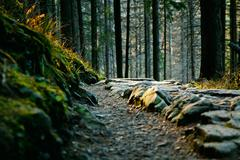 mountain ladscape with rocky path and trees - stock photo