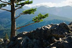 Stock Photo of green sunny landscape with trees in forest and mountains in zakopane