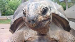 Rare Aldabra Giant Tortoise Stock Footage