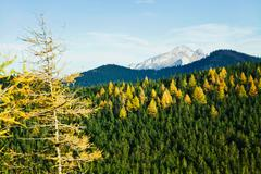 green sunny landscape with trees in forest and mountains in zakopane - stock photo