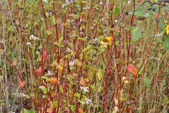 Variegated flowers. Stock Photos