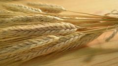 Barley, panning,studio lighting Stock Footage