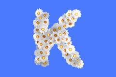 Stock Illustration of Camomile flower letter K