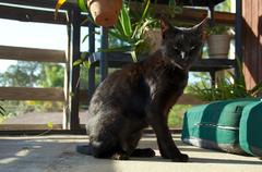 Young black cat on porch Stock Photos