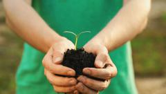 Man presenting a young plant sprout Stock Footage