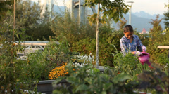 Young Japanese girl watering plants in an urban garden Stock Footage