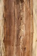 Oak log core Stock Photos