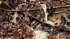 Mountain stream flowing down a hillside through the dry leaves, water source. Stock Footage