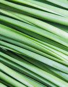 Leaf texture background Stock Photos