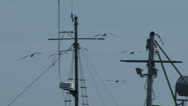 Stock Video Footage of pelicans, birds, fly, flying, marina, ships, masts, rigging