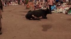 Busy market in India. smooth roaming shot. Stock Footage