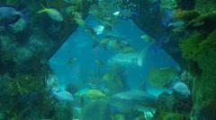 2d aquarium Stock Footage