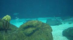 2d underwater ocean Stock Footage