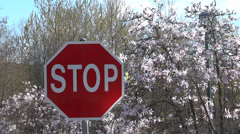 Spring Road - Stop Sign and Magnolia Tree - stock footage