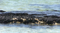 Italy - mussels in the adriatic sea - stock footage