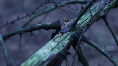 Handheld shot of green branch - stock footage