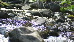 Creek water sunshine tracking Stock Footage