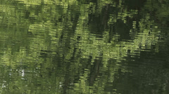 Beautiful reflection of forest trees in lake,waves spreading in concentric lines Stock Footage