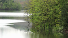 Beautiful landscape detail of lake and forest coast, reflection in water surface Stock Footage