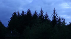 Pan across forest canopy Stock Footage