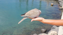 Woman cares of pigeon that is feeding crumbs Stock Footage