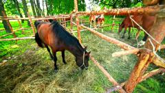 Horse eating hay. Horse feeding. Young horse behind wood fence at ranch Stock Footage