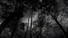 Scary black and white trees during the storm. - stock footage