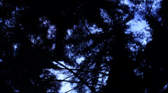Handheld looking up through trees and spinning Stock Footage