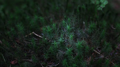 Track shot into moss - stock footage