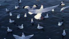 Seagull In Dark Blue Sea Stock Footage
