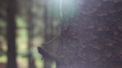 Pan through forest with flare Stock Footage