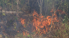 Bonfire burning trees and dry grass, a fire in the forest Stock Footage
