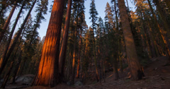 Time Lapse of Redwood Shadows in Sequoia National Park Stock Footage
