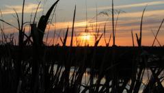 Sunset on the Marsh Stock Footage