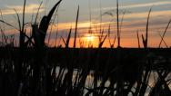 Stock Video Footage of Sunset on the Marsh