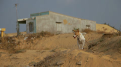 A dog is looking for something near poor small house in the sand. Stock Footage