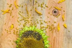 background flower sunflower seeds wooden countertop - stock photo