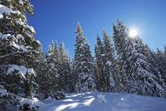 Scenic snowy winter forest and sunny blue sky. colorado winter wonderland. Kuvituskuvat