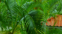 Tropical Rain in Exotic Thailand Stock Footage