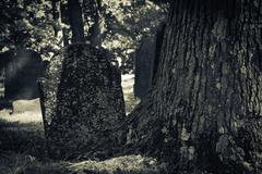 old cemeteries - tombstone by tree - stock photo