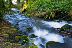 small mossy creek with mountain river. nature closeup. montana, united states - stock photo