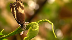 Beautiful macro shooting of butterfly Stock Footage