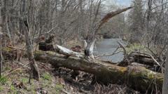 Stream in the springtime Stock Footage