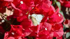 Closeup of butterfly and pollination Stock Footage