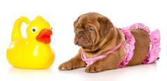 dog bath time - stock photo