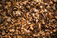 Dry fall leaves background. autumn season backdrop. Stock Photos