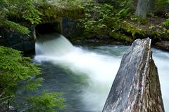Mountain stream and small bridge. mossy forest landscape. Stock Photos