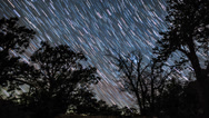 Stock Video Footage of Star trails timelapse galaxy night sky over forest trees.